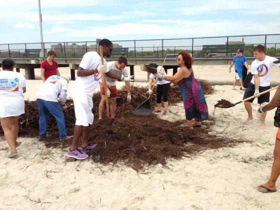 Dune stewardship volunteers with Surfrider NYC. Photo: Bryce DuBois