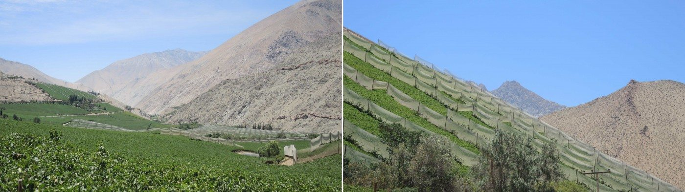 Agricultural land use visual effect in the Elqui Valley. Photos: @KDP