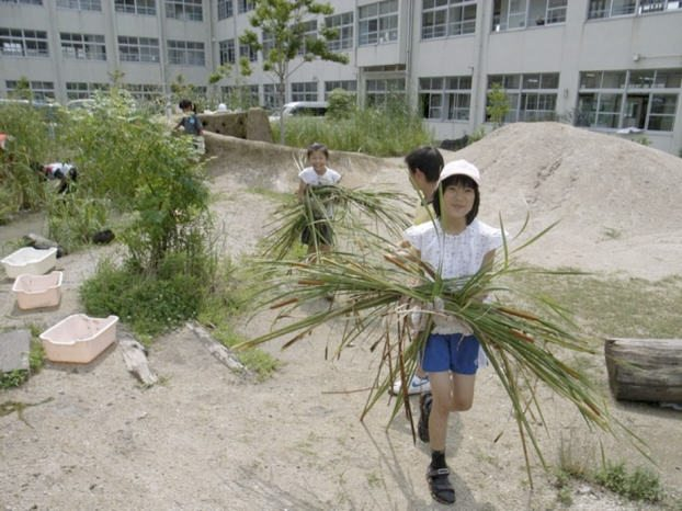 "Cutting and collecting the grass(Typha latifolia L.) to manage the biotope. Photo"" Keitaro Ito"