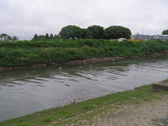 Native riparian vegetation along Buenos Aires waterfront (February 2014). Photo: Ana Faggi