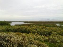 The Rondevlei Nature Reserve presents one of the very few sites for the conservation of Sand Plain Fynbos. Photo: Georgina Avlonitis