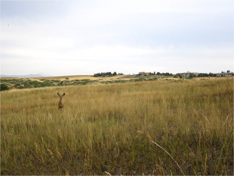 Open space in a Colorado development. Photo: Sarah Reed