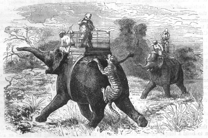 Tiger hunting in India 1880's