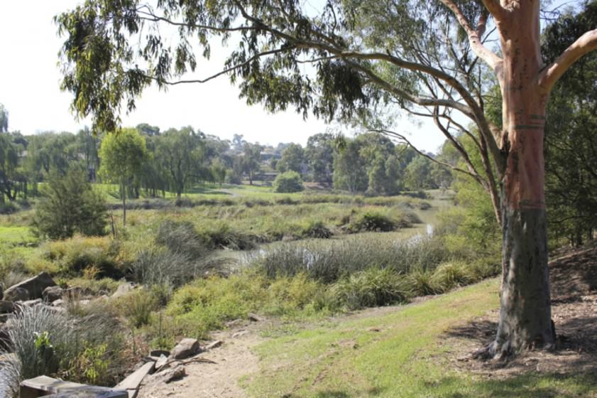 Constructed wetland in suburban Melbourne, Victoria, Australia. Photo: M. Dobbie