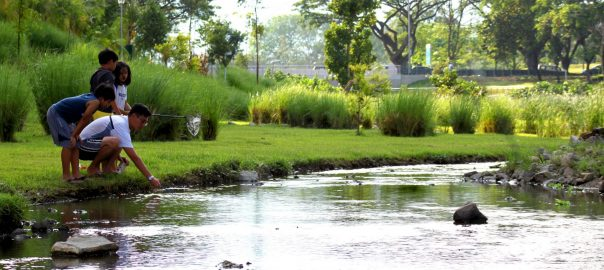 Signs Of Spring In Urban Wetland Little >> Daylighting And Restoring Urban Streams Ponds And Wetlands Can