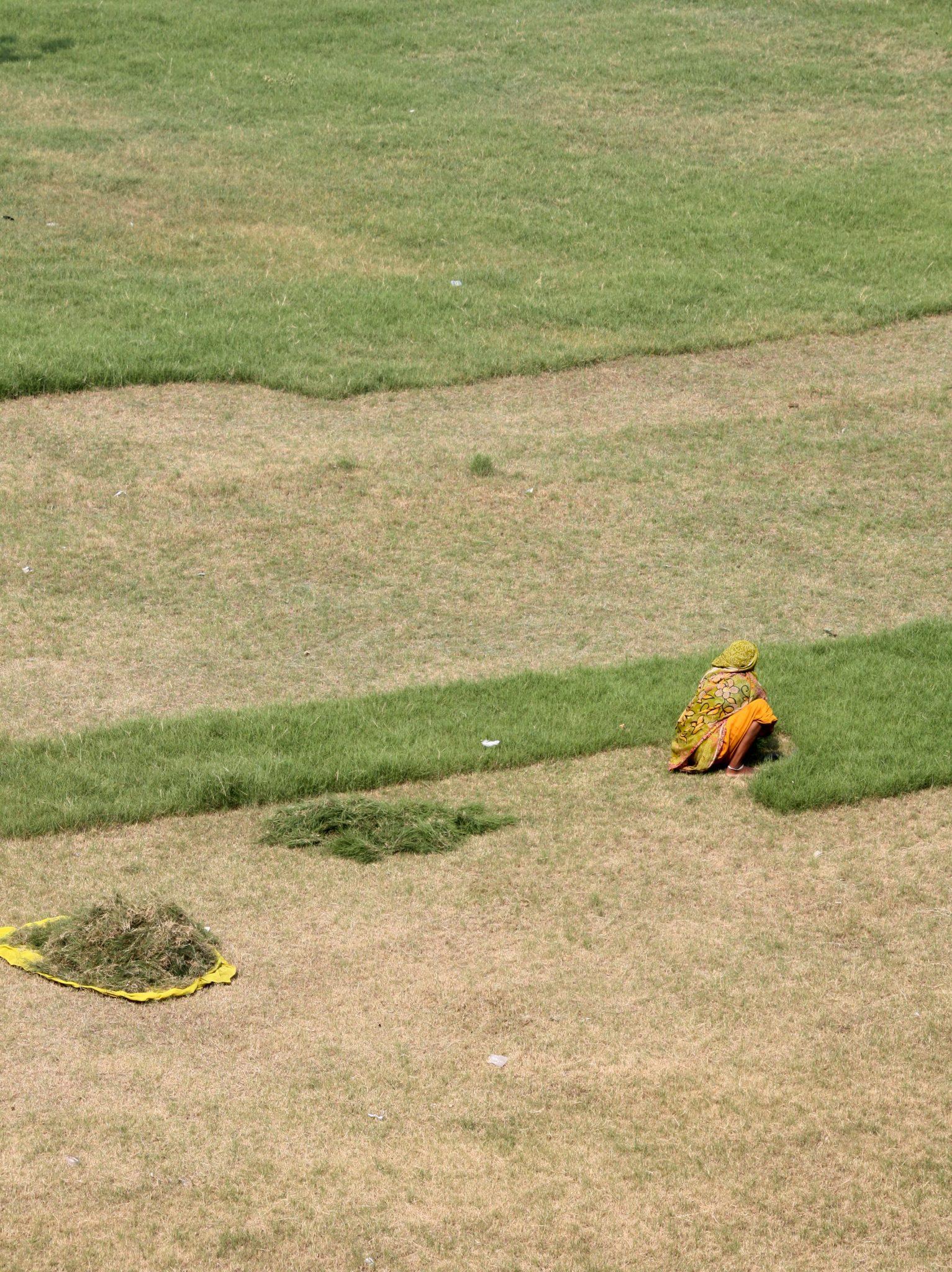Cutting and harvesting grass outside the Taj Mahal, Agra. Photo (copyright): David Maddox