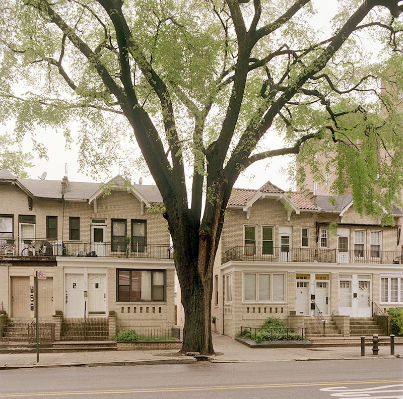 American Elm, Bay Ridge Brooklyn April 28, 2010. Copyright Benjamin Swett