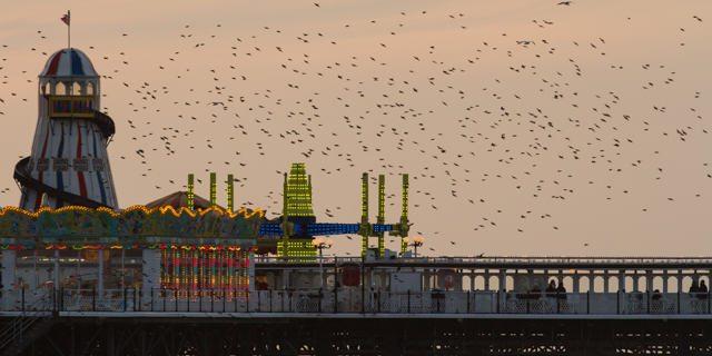 BirdsBy(copyright)JoshuaBurch