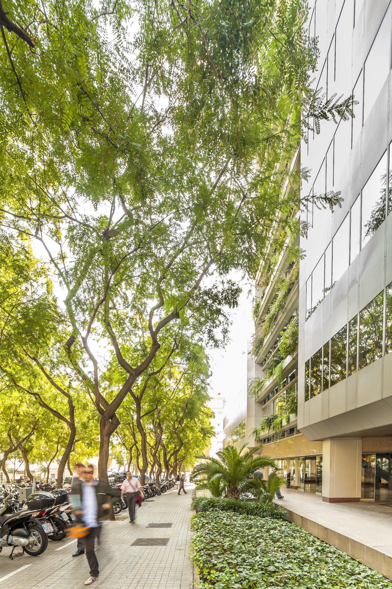 Canopy Street. By (copyright) Andrés Flajszer