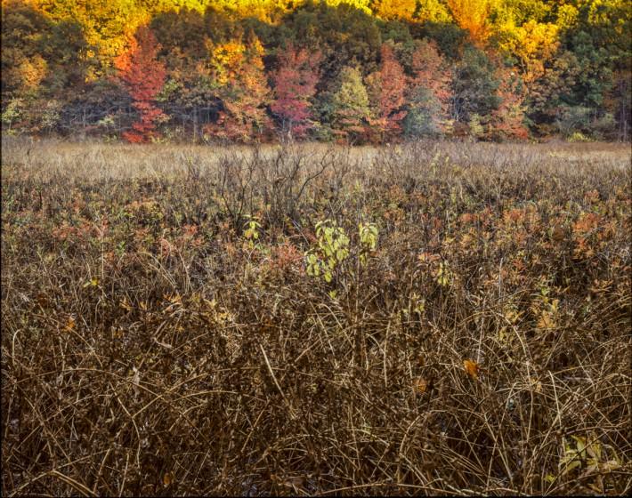 Islington Pond. Photo (copyright) Mike Feller