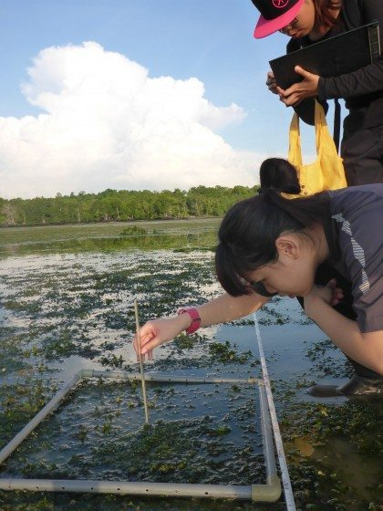Seagrass monitoring