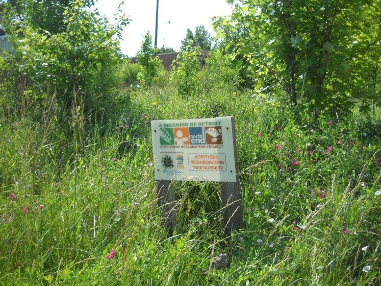 Green infrastructure planning. Photo: Greening of Detroit