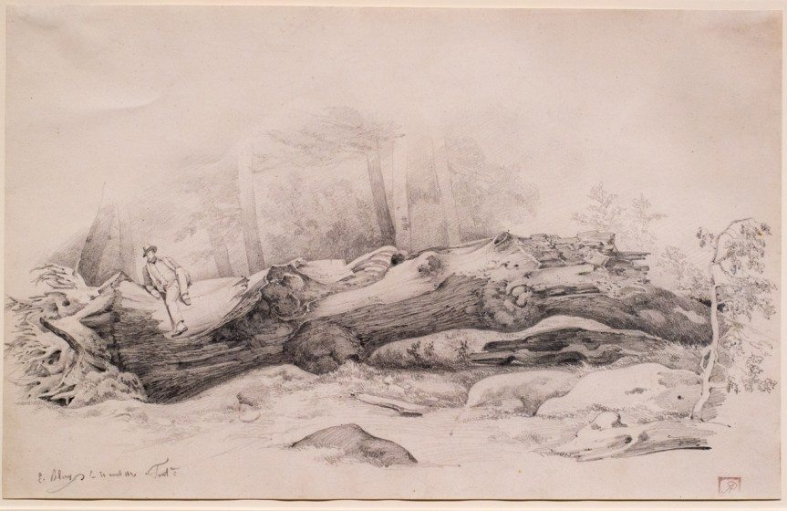 The Fallen Tree, Fontainebleau by Eugene Blery, 1831, Graphite on paper