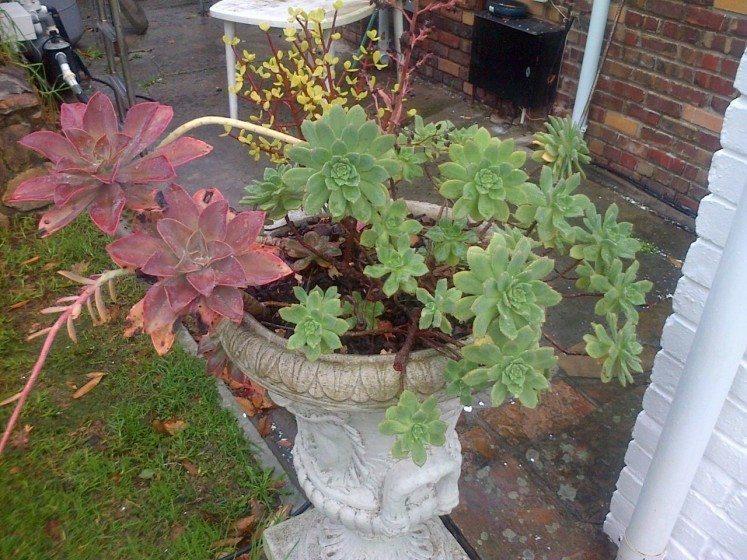 Pot plants_TNOC_photo