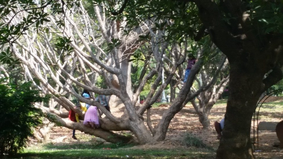 3. In the heart of the city, children engage in a time honored favorite activity - climbing trees!