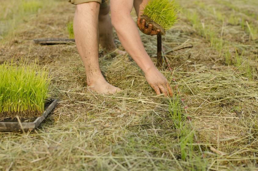 6_hand_planting_lydon