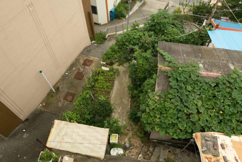 8_Daejeon_garden_lydon