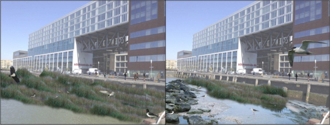 Examples of restoring tidal ecosystems in the city (artist impression)