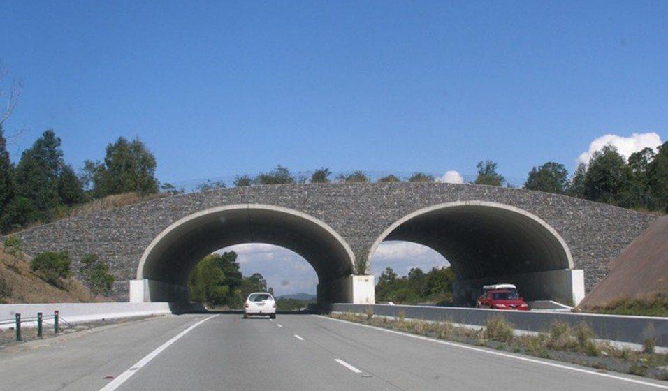 06 Wildlife bridge over highway in Queensland, Australia