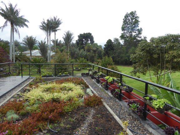 Green roof at the Botanic Garden Jose Celestino Mutis . Photo: Ana Faggi