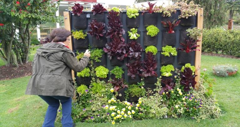 Cecilia Herzog taking a photo of an edible green wall at the Botanic Garden. Photo: Ana Faggi