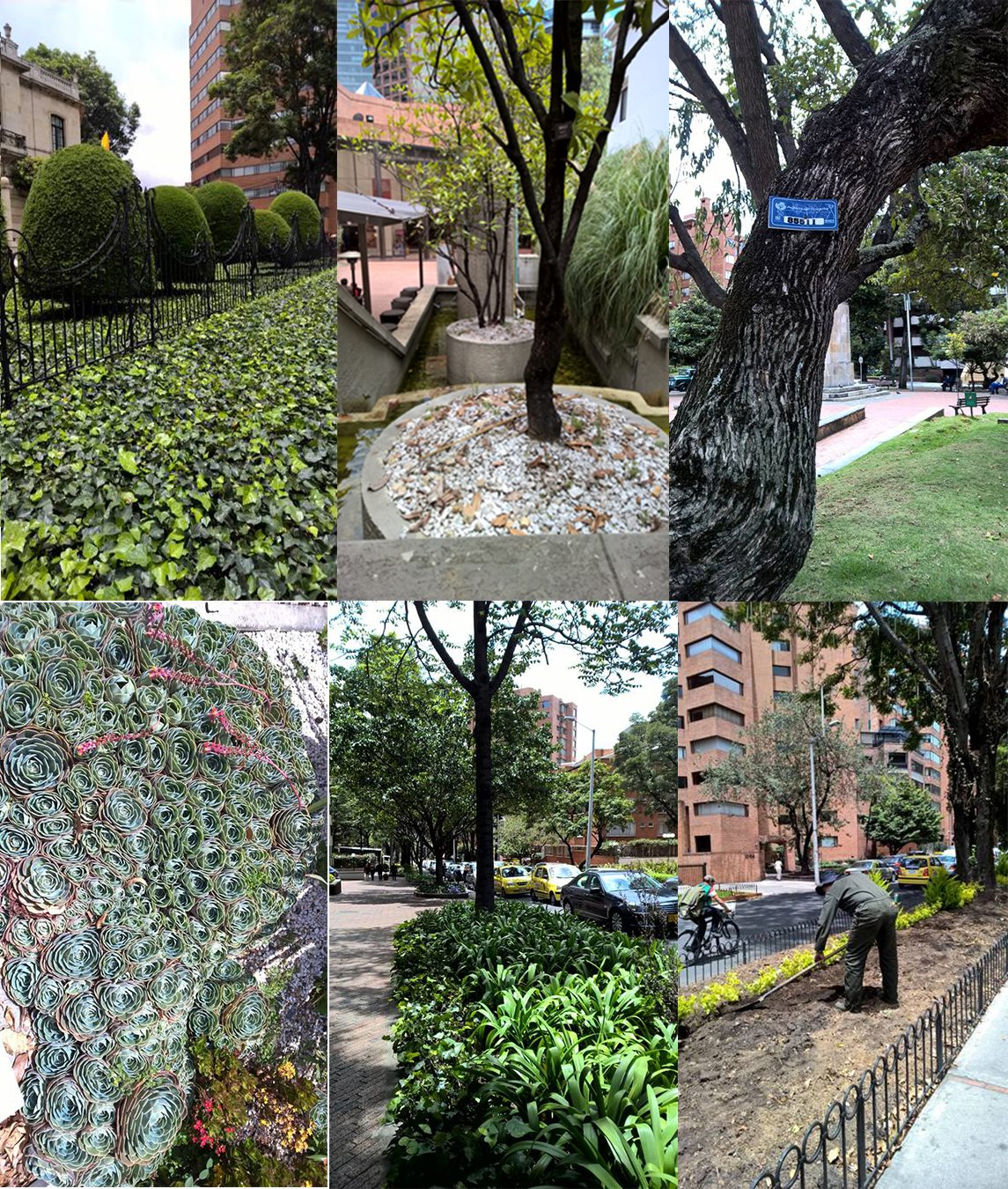Some examples of the diverse green Infrastructure in Bogotá city. Photos: Ana Faggi
