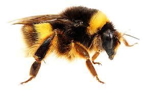 8 Bumble Bee