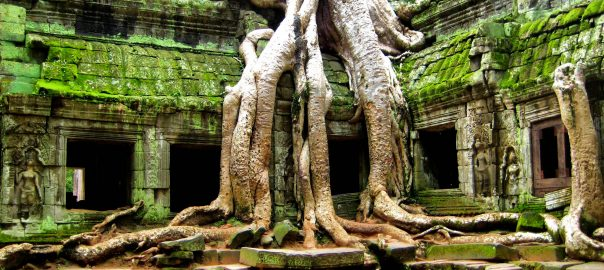 More_Angkor_Trees_(1503334934)