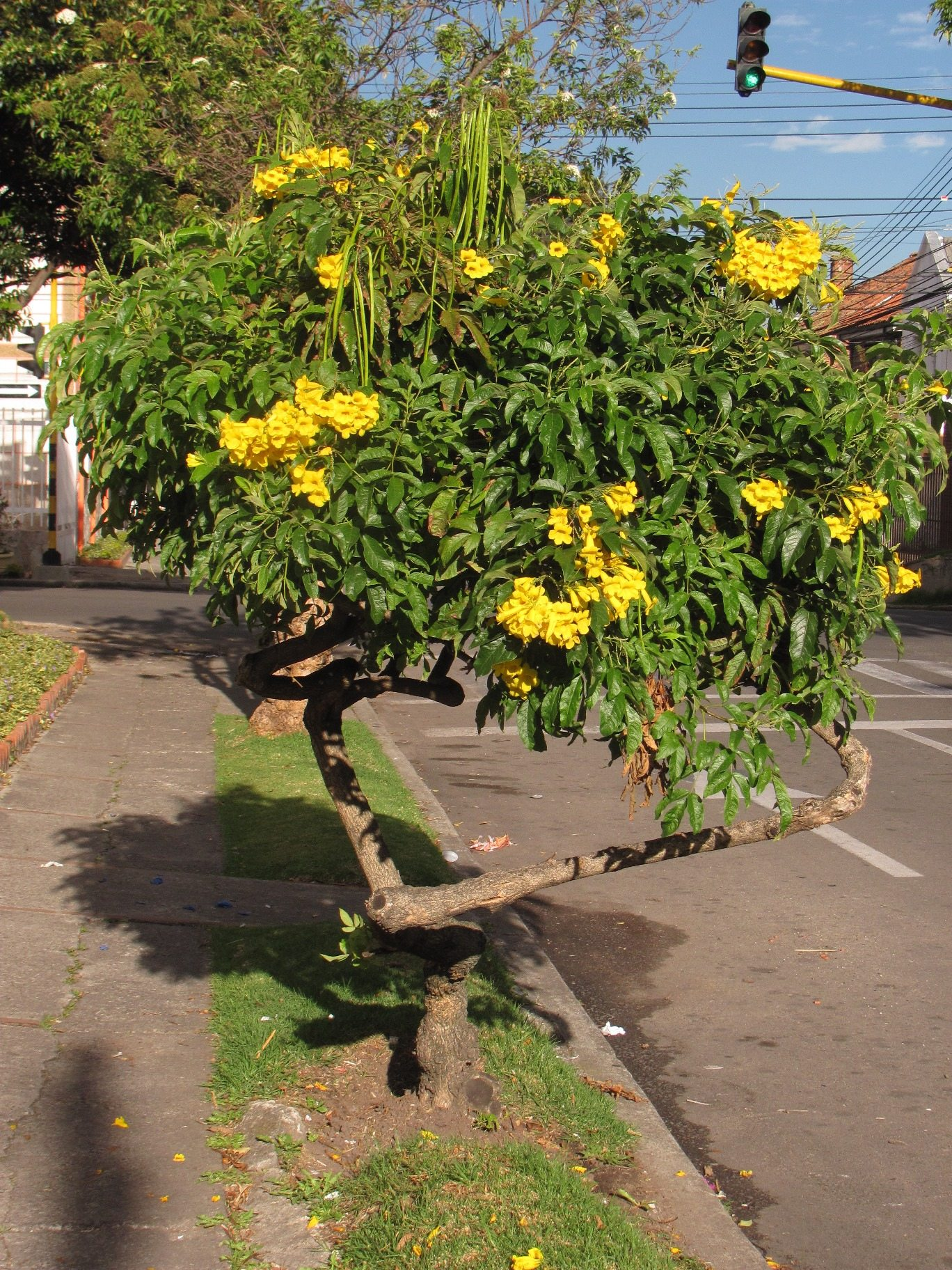 Increasing The Native Plants Of Colombian Cities The Nature Of Cities