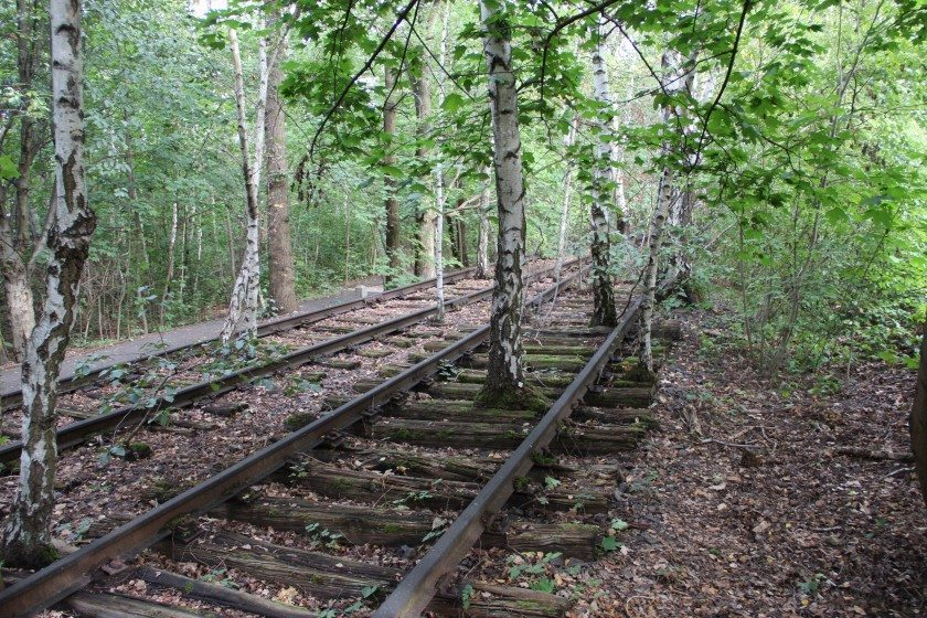 Park Südgelände in Berlin is one of the most famous examples of including vegetation on abandoned railways in a public park. Photo Maria Ignatieva