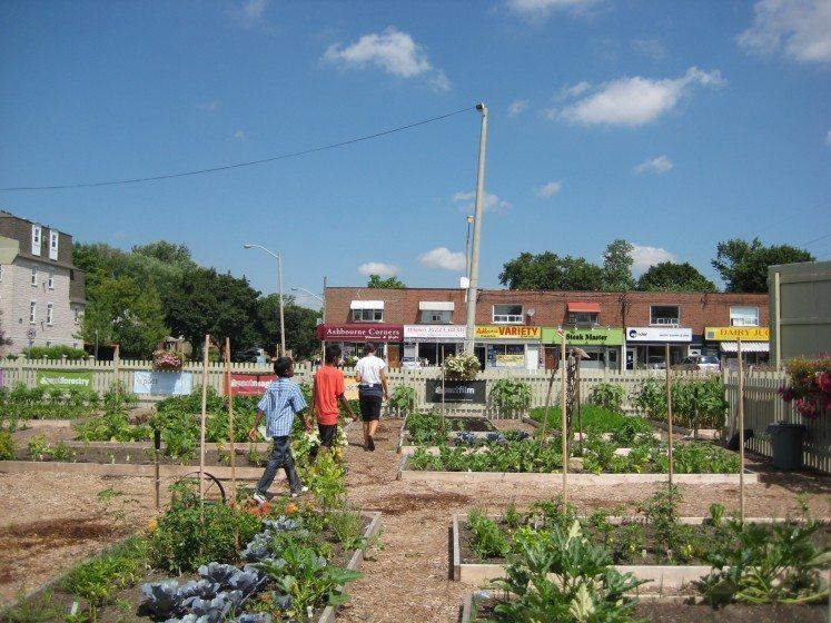 Bloor Acorn Community Garden RIP