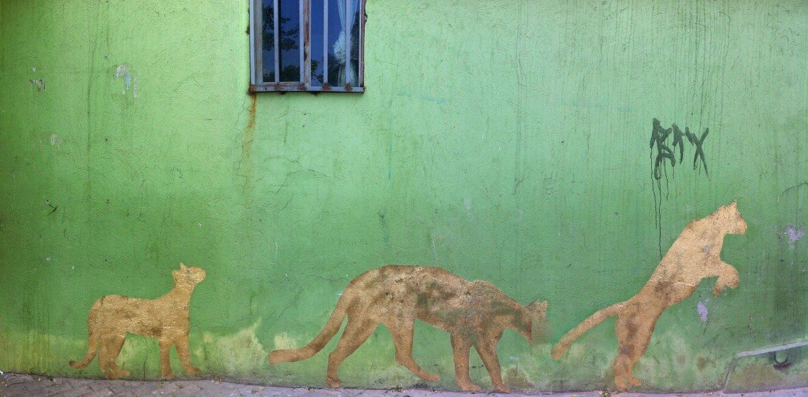Pumas stalk across a walk in Medellín, Colombia. Photo: David Maddox