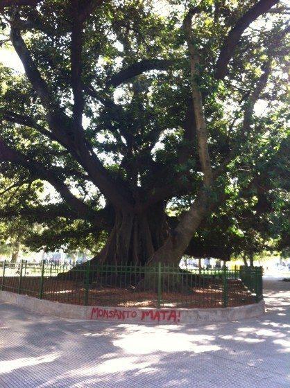 Monsanto Mata—Monsanto Kills, in a fancy Buenos Aires park. Photo: David Maddox