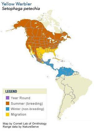 yellowwarblermap