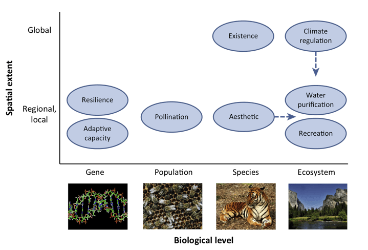 Figure 3. Different attributes of biodiversity and their relevance for conservation at different spatial scales (From Pearson, 2016)
