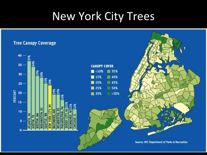 New York City tree cover. Source: New York Department of Parks and Recreation