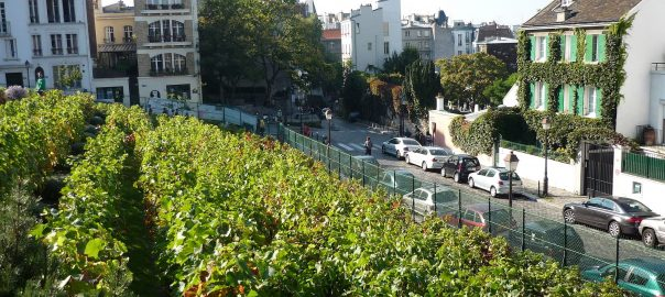 Confronting the Dark Side of Urban Agriculture – The Nature
