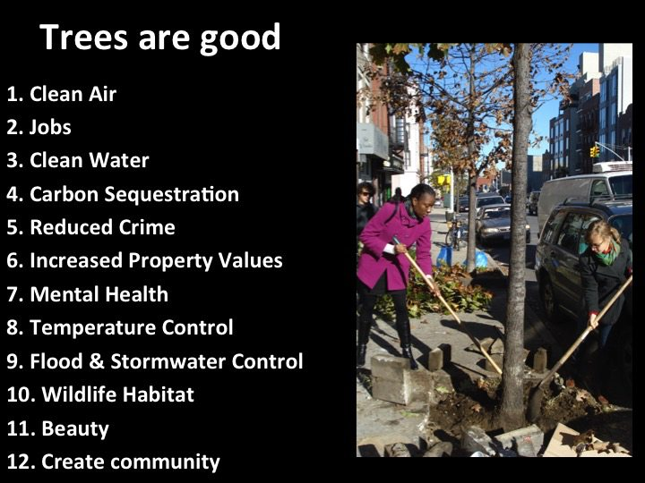 Trees are good--David Maddox
