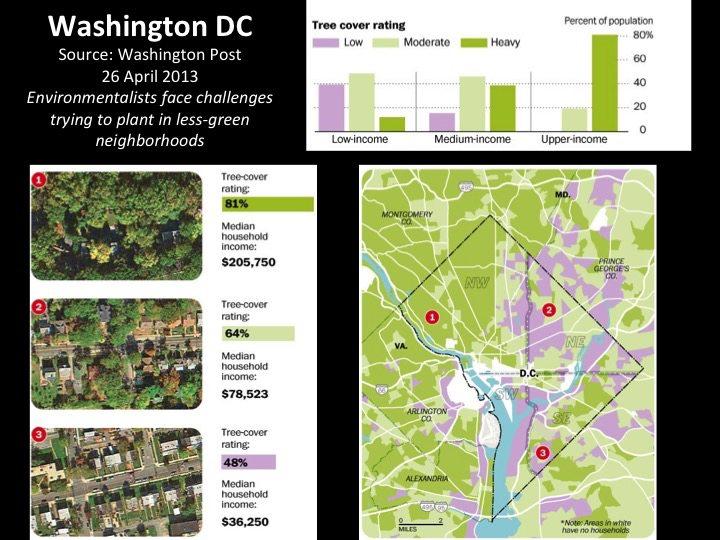 Washington Tree Cover--David Maddox