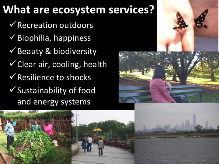 What are ecosystem services--David Maddox