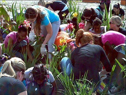Residents participating in Keep Tampa Bay Beautiful