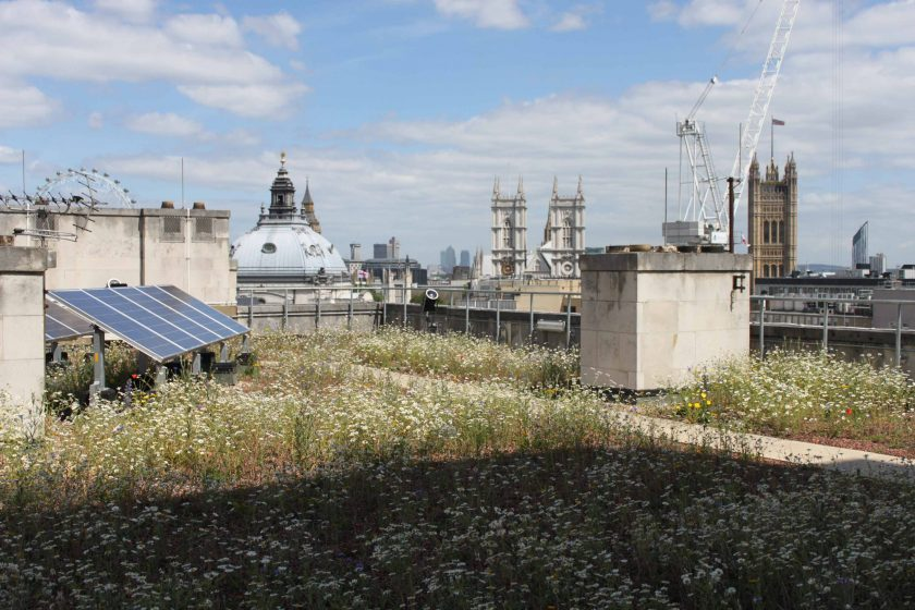 Biodiverse extensive green roof london