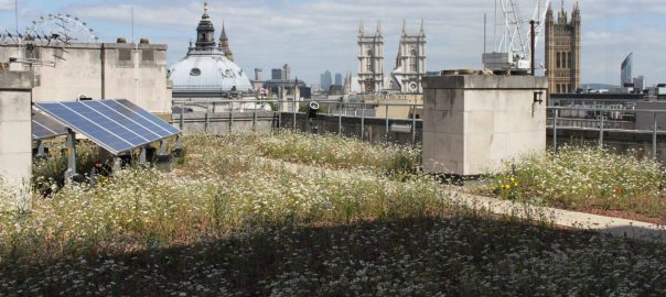 Biodiverse extensive green roof london GARY GRANT Feature
