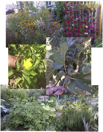 Collage of gardens in Jersusalem