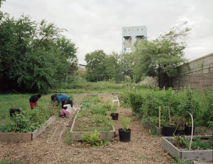 Urban Agriculture Has Many Benefits Is One Of Them A Contribution