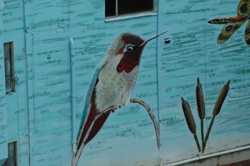 Image 12 Anna's Hummingbird male Photo Mike Houck