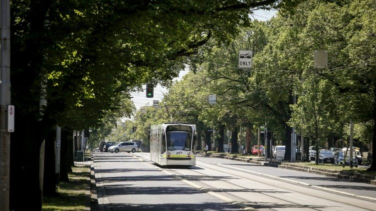 Melbourne trees and trams