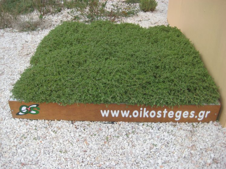 A one square metre green roof plot. Photo: Andrew Clements