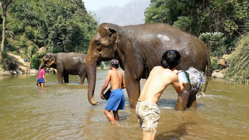 Essay About Science Employing Local Villagers To Care For The Elephants At Elephant Nature  Park Photo Lynn Wilson A Modest Proposal Essay Topics also Essay Writing Paper Elephants In The City  The Nature Of Cities Example Of A College Essay Paper