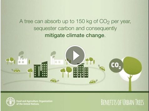 fao-benefits-of-trees-video